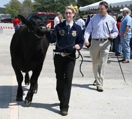 spring try club livestock show